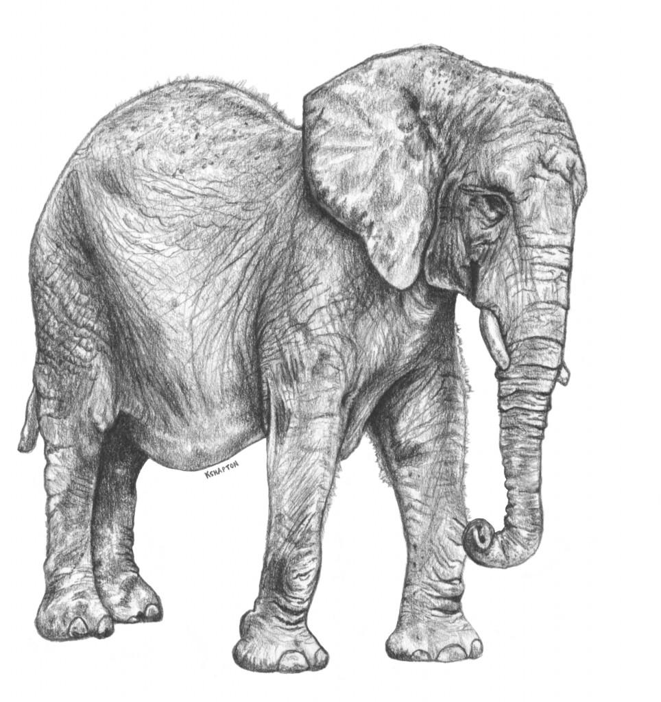 elephant_jan16_2016